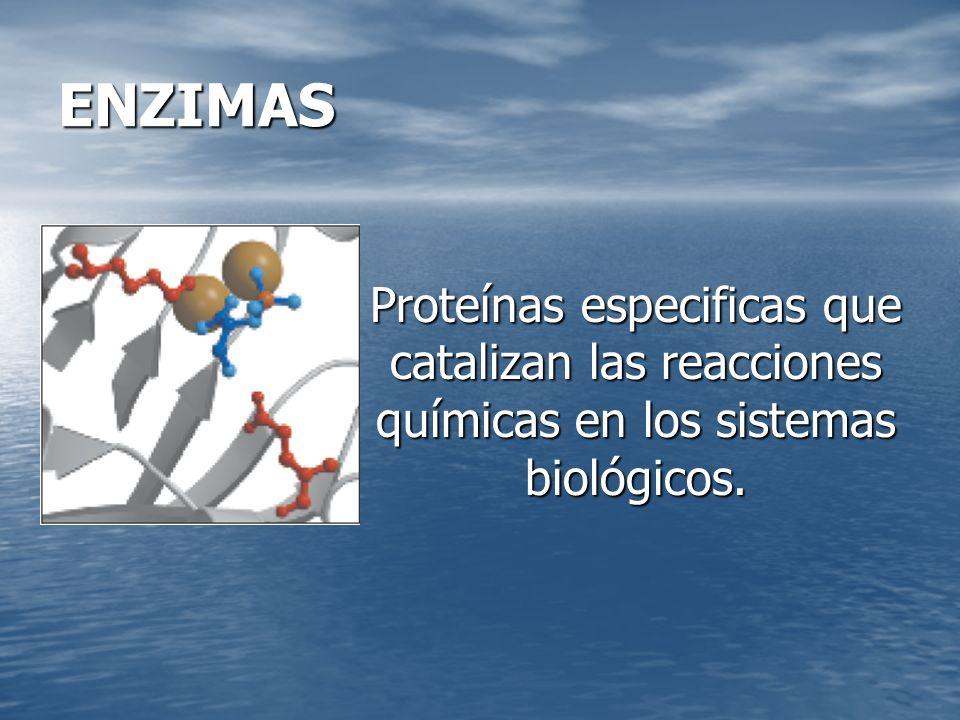KM de algunas enzimas Enzima y sustrato KM (mn) Catalasa H2O225 H2O225Hexoquinasa Glucosa0.15 Glucosa0.15 Fructosa1.50 Fructosa1.50Quimotripsina N – Benzoiltirosinamida2.5 N – Benzoiltirosinamida2.5 N – Formiltirosinamida 12.0 N – Formiltirosinamida 12.0 N - Acetiltirosinamida 32 N - Acetiltirosinamida 32 Gliciltirosinamida 122 Gliciltirosinamida 122 Anhidrasa Carbónica 9.0 Glutamato –deshidrogenasa Glutamato 0.12 Glutamato 0.12 L.
