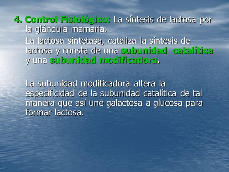 4.Control Fisiológico: La síntesis de lactosa por la glándula mamaria.
