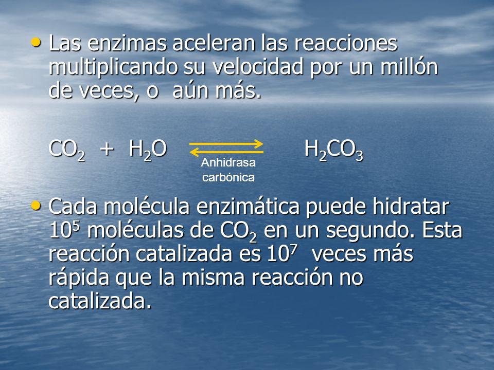 Las enzimas aceleran las reacciones multiplicando su velocidad por un millón de veces, o aún más.