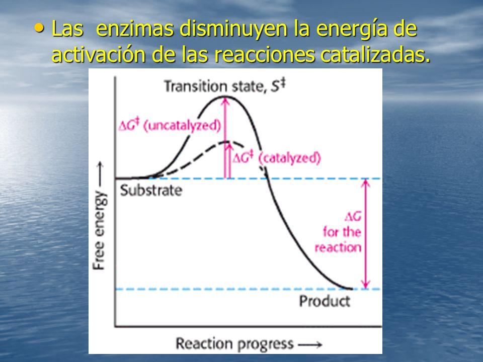 Las enzimas disminuyen la energía de activación de las reacciones catalizadas.