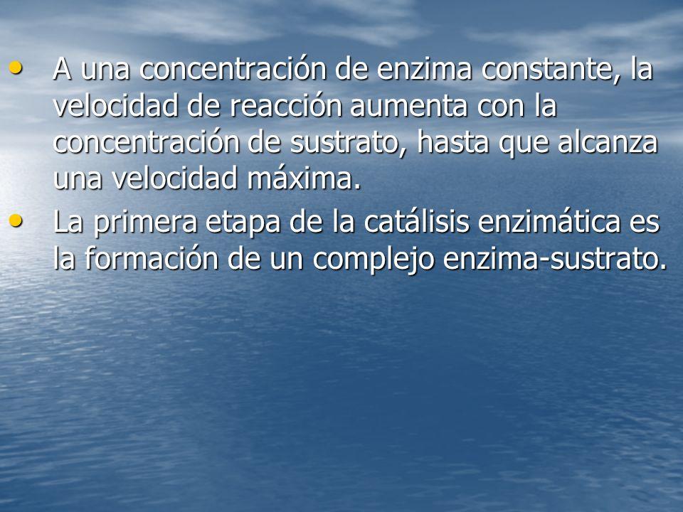 A una concentración de enzima constante, la velocidad de reacción aumenta con la concentración de sustrato, hasta que alcanza una velocidad máxima.