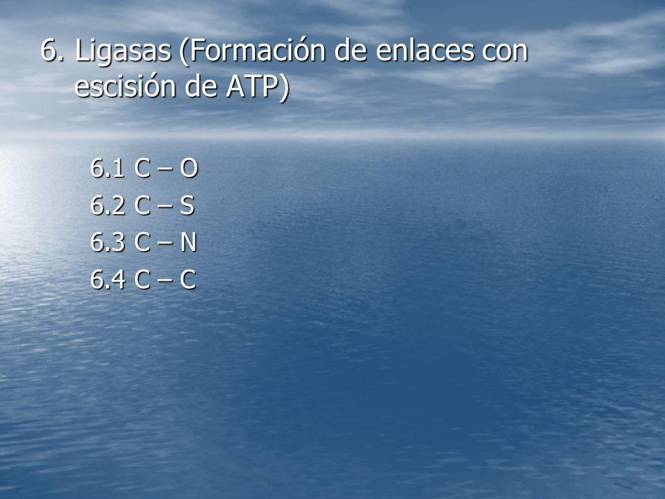 6. Ligasas (Formación de enlaces con escisión de ATP) 6.1 C – O 6.2 C – S 6.3 C – N 6.4 C – C