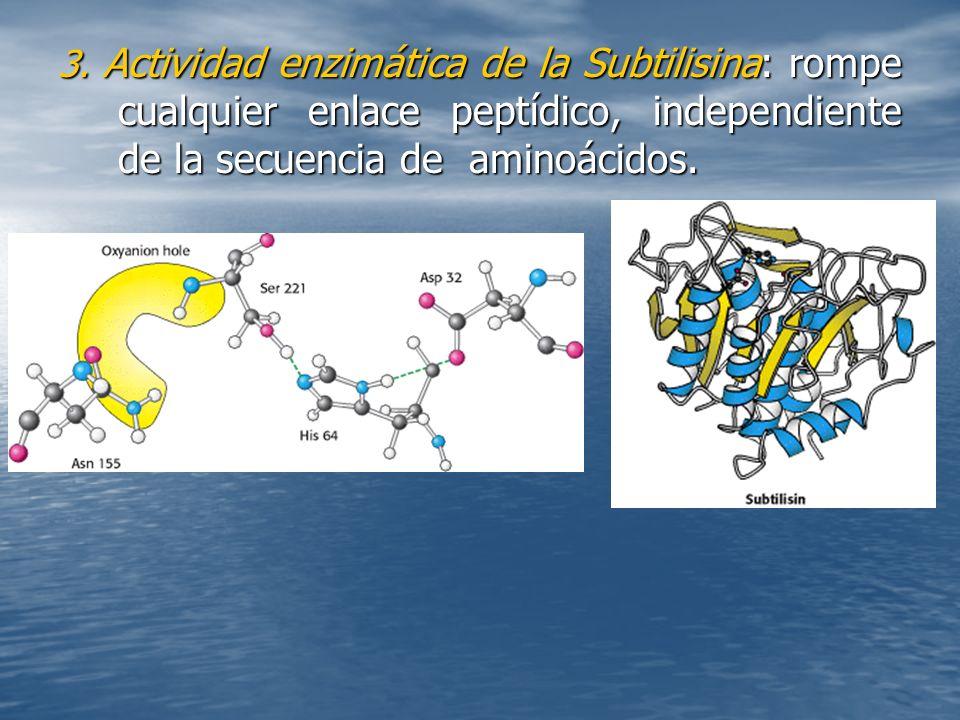 3. Actividad enzimática de la Subtilisina: rompe cualquier enlace peptídico, independiente de la secuencia de aminoácidos.