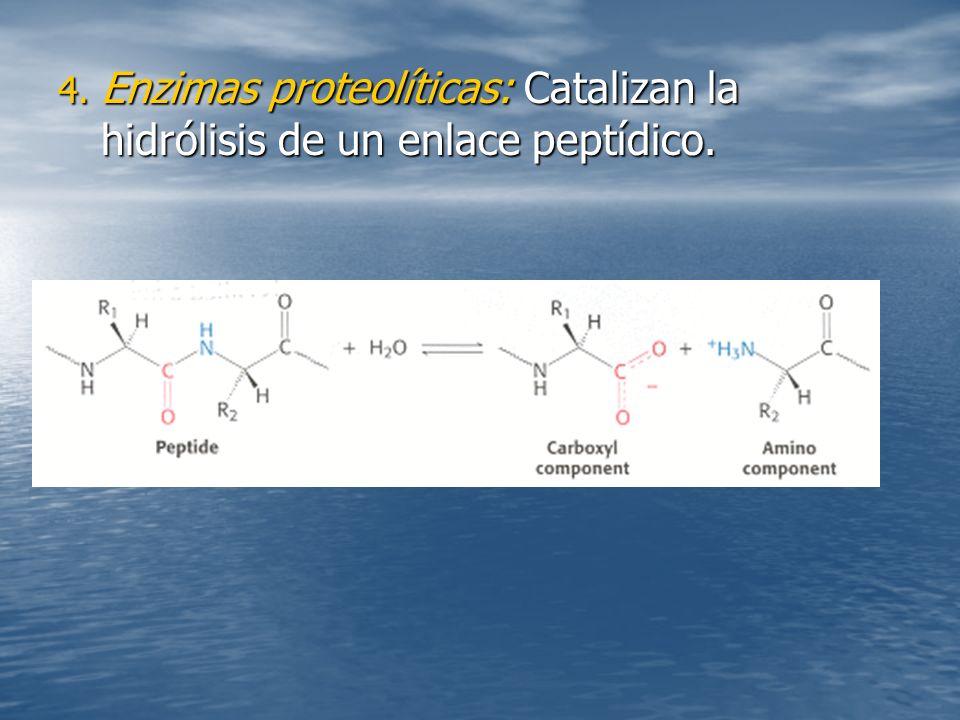 4. Enzimas proteolíticas: Catalizan la hidrólisis de un enlace peptídico.