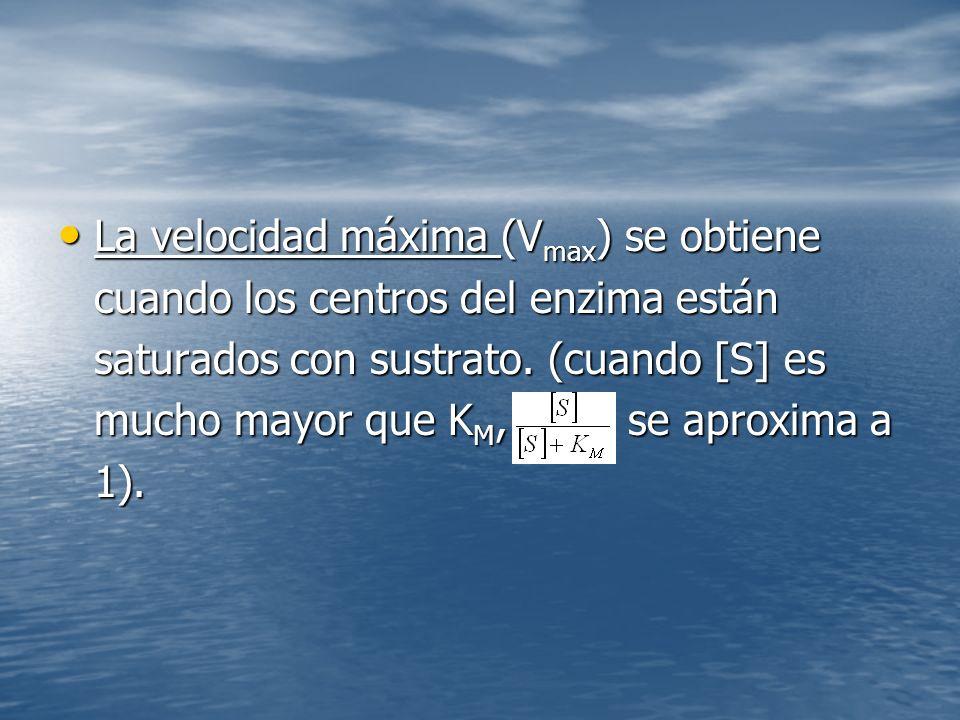 La velocidad máxima (V max ) se obtiene cuando los centros del enzima están saturados con sustrato.
