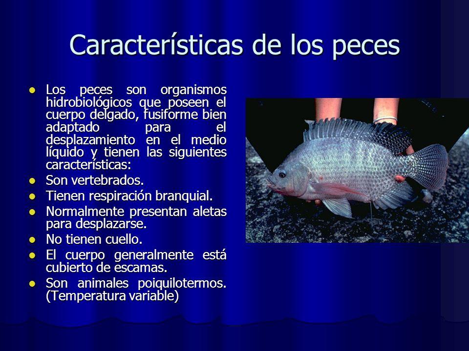 Características de los peces Los peces son organismos hidrobiológicos que poseen el cuerpo delgado, fusiforme bien adaptado para el desplazamiento en
