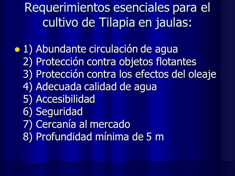 Requerimientos esenciales para el cultivo de Tilapia en jaulas: 1) Abundante circulación de agua 2) Protección contra objetos flotantes 3) Protección