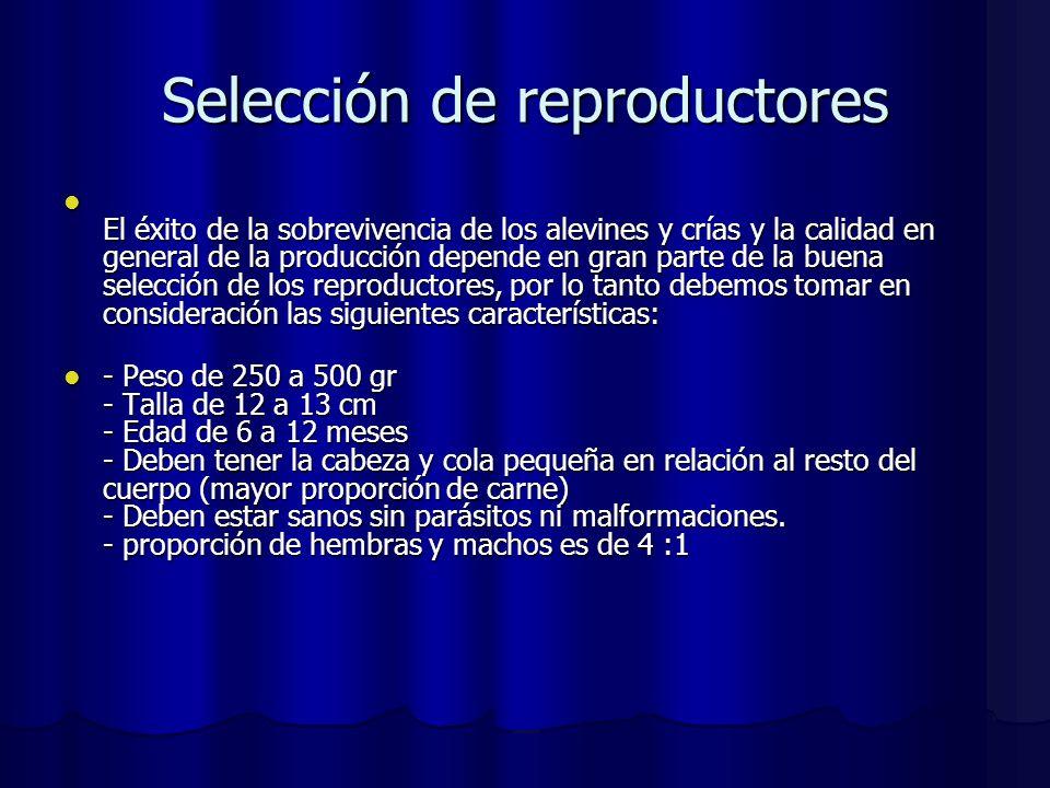 Selección de reproductores El éxito de la sobrevivencia de los alevines y crías y la calidad en general de la producción depende en gran parte de la b