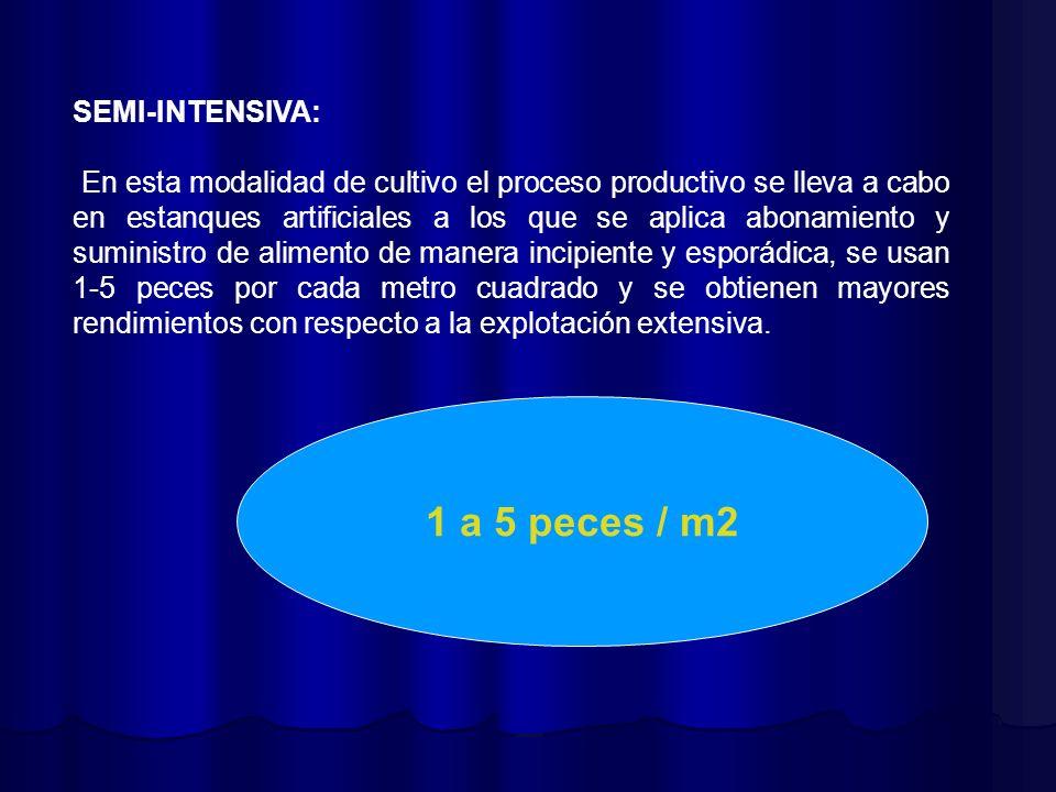 SEMI-INTENSIVA: En esta modalidad de cultivo el proceso productivo se lleva a cabo en estanques artificiales a los que se aplica abonamiento y suminis