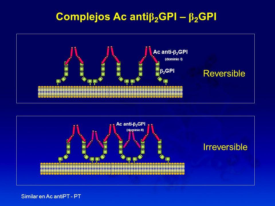 2 GPI Ac anti- 2 GPI (dominio I) Complejos Ac anti β 2 GPI – β 2 GPI Ac anti- 2 GPI (dominio II) Reversible Irreversible Similar en Ac antiPT - PT