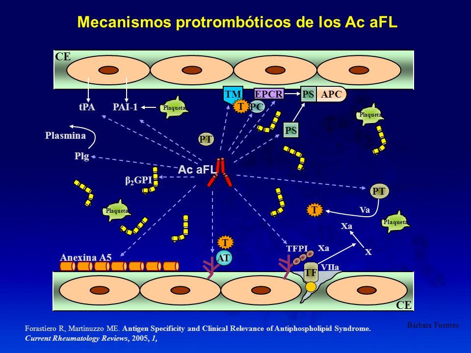 CE Ac aFL APCPS PC PS Plaqueta PT TM AT T T T TF Anexina A5 β 2 GPI TFPI tPAPAI-1 Plasmina Plg Xa VIIa Va Xa X EPCR Mecanismos protrombóticos de los A