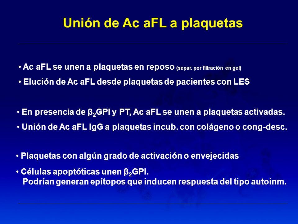 Unión de Ac aFL a plaquetas Plaquetas con algún grado de activación o envejecidas Células apoptóticas unen β 2 GPI. Podrían generan epítopos que induc
