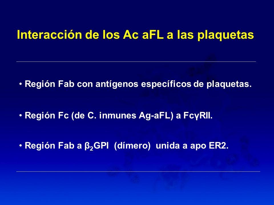 Interacción de los Ac aFL a las plaquetas Región Fab con antígenos específicos de plaquetas. Región Fc (de C. inmunes Ag-aFL) a FcγRII. Región Fab a β