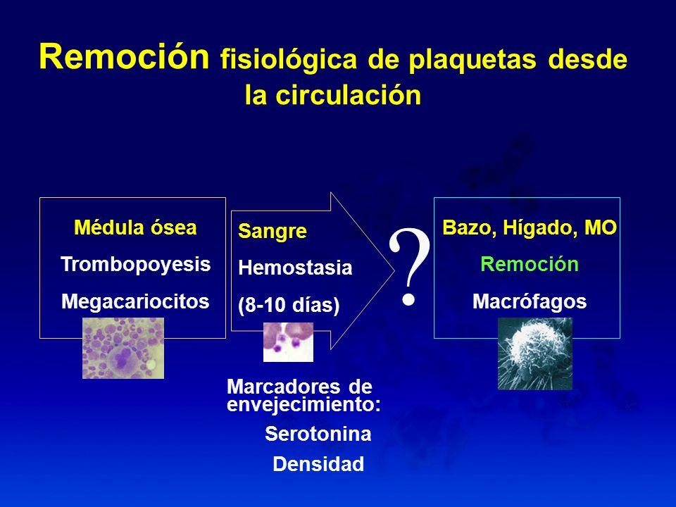 Remoción fisiológica de plaquetas desde la circulación Marcadores de envejecimiento: Serotonina Densidad Médula ósea Trombopoyesis Megacariocitos Sang