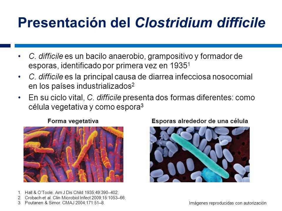 Presentación del Clostridium difficile Forma vegetativaEsporas alrededor de una célula vegetativa C. difficile es un bacilo anaerobio, grampositivo y