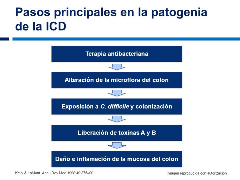 Pasos principales en la patogenia de la ICD Terapia antibacteriana Alteración de la microflora del colon Exposición a C. difficile y colonización Libe
