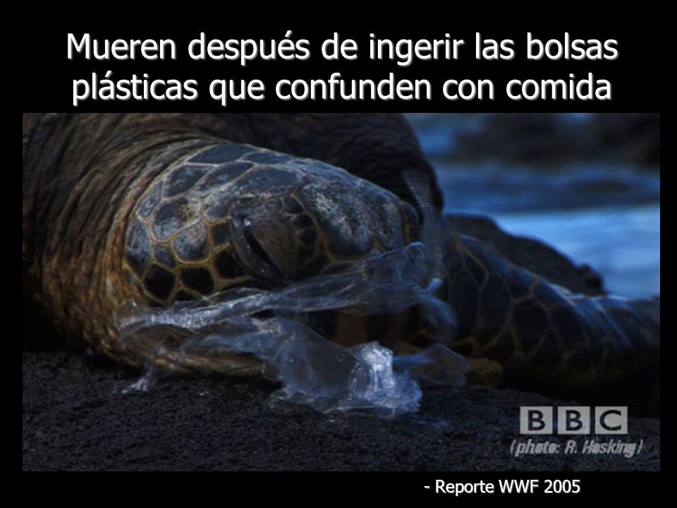 Mueren después de ingerir las bolsas plásticas que confunden con comida - Reporte WWF 2005