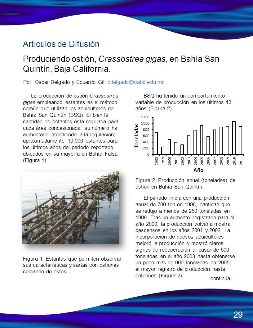Artículos de Difusión Produciendo ostión, Crassostrea gigas, en Bahía San Quintín, Baja California. Por: Oscar Delgado y Eduardo Gil odelgado@uabc.edu