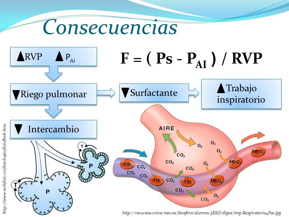 Consecuencias RVP P AI Riego pulmonar Intercambio http://recursos.cnice.mec.es/biosfera/alumno/3ESO/diges/img/Respiratorio4F10.jpg Surfactante Trabajo inspiratorio http://www.webfisio.es/fisiologia/fisioflash.htm F = ( Ps - P AI ) / RVP