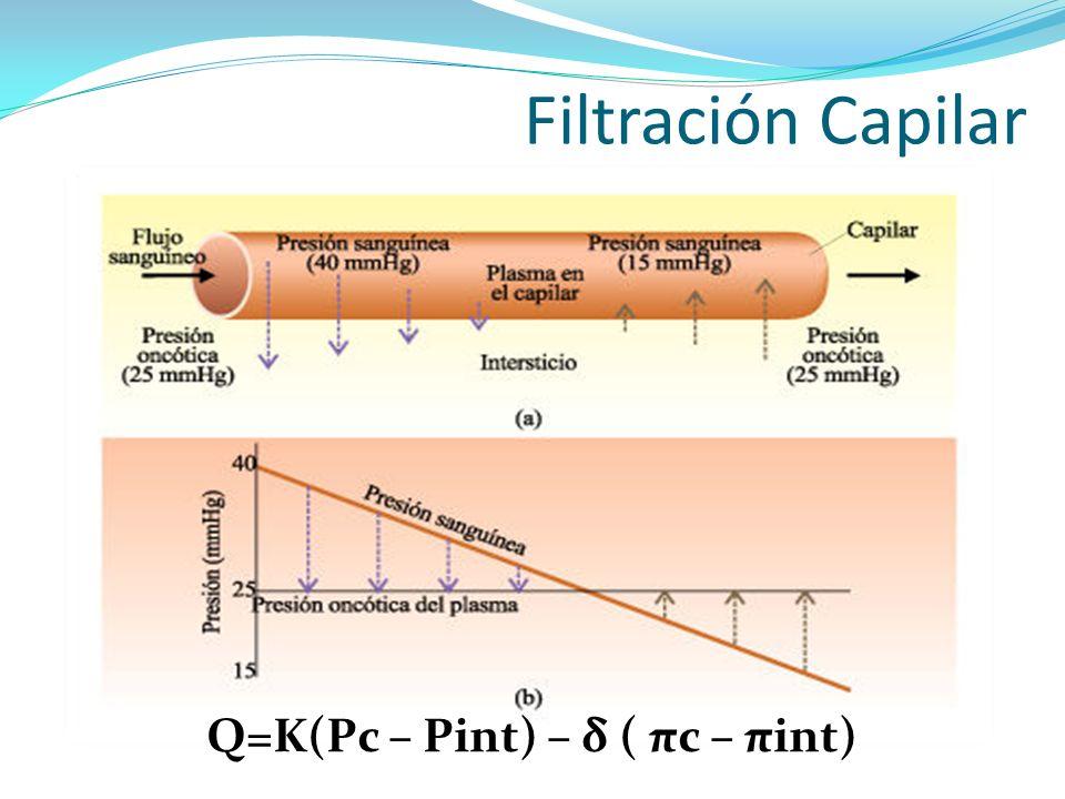 Filtración Capilar Q=K(Pc – Pint) – δ ( πc – πint)