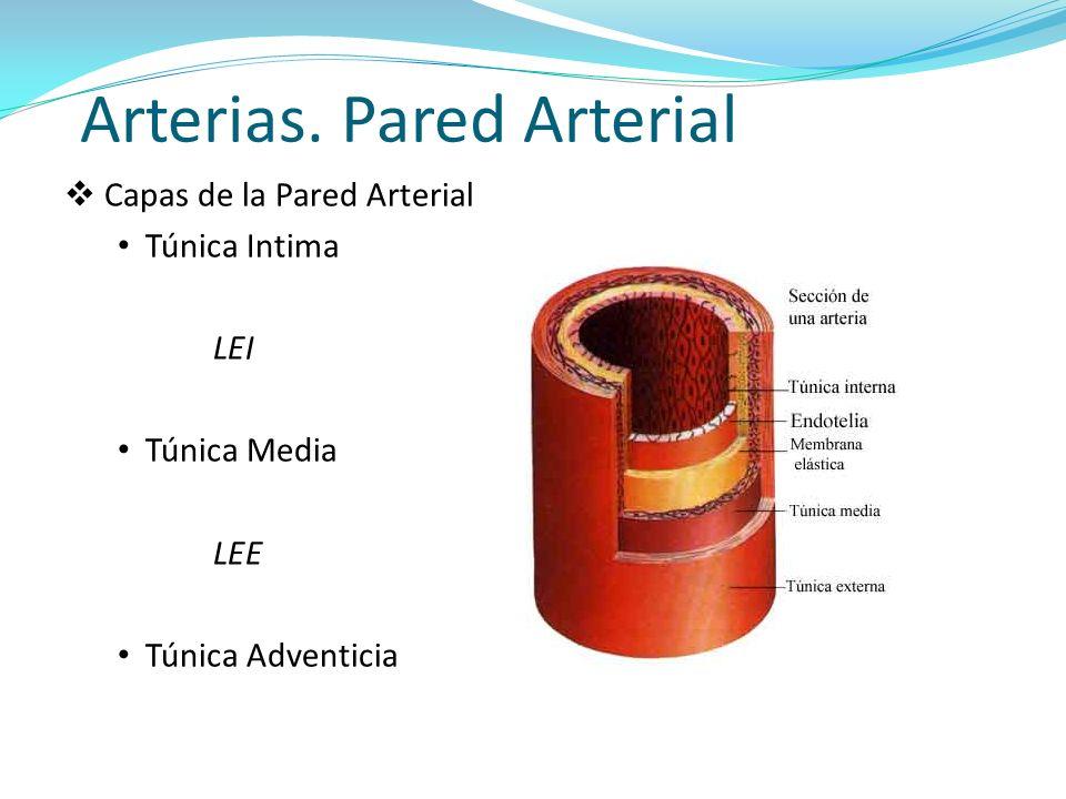 Capas de la Pared Arterial Túnica Intima LEI Túnica Media LEE Túnica Adventicia Arterias.