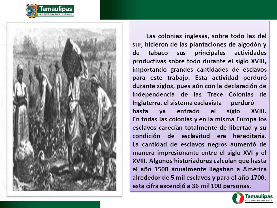 Las colonias inglesas, sobre todo las del sur, hicieron de las plantaciones de algodón y de tabaco sus principales actividades productivas sobre todo