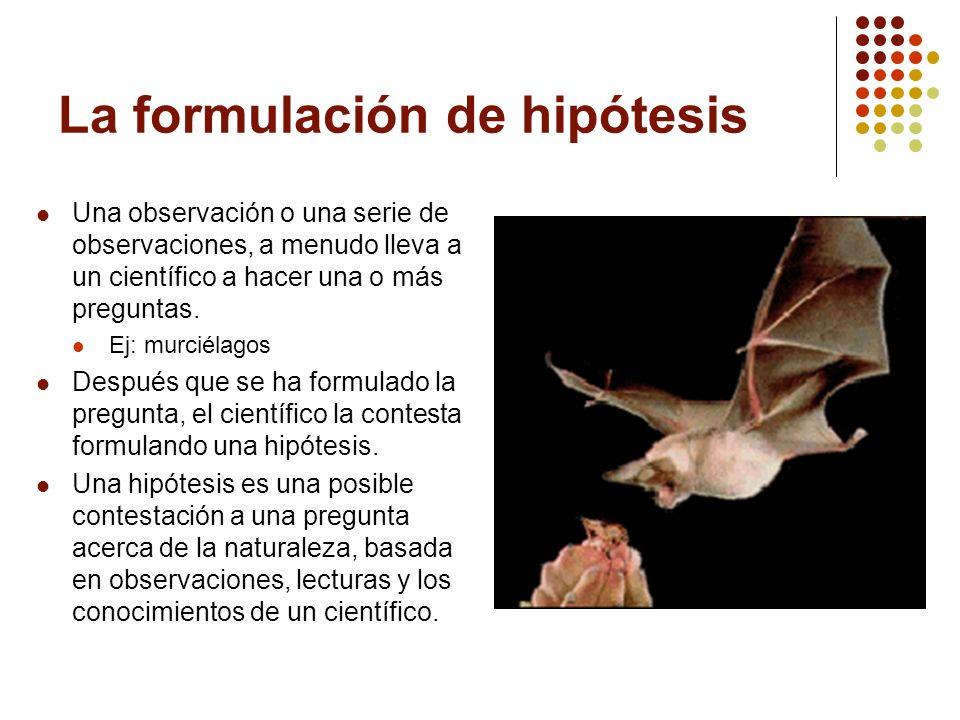 La formulación de hipótesis Una observación o una serie de observaciones, a menudo lleva a un científico a hacer una o más preguntas. Ej: murciélagos