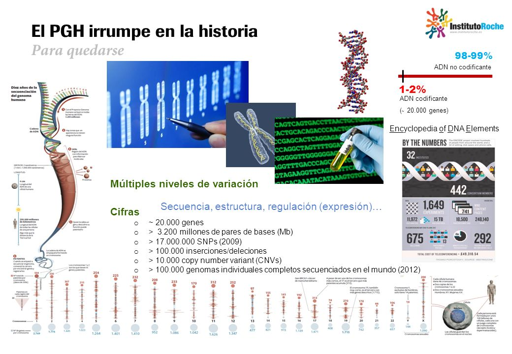El Genoma Humano: un cuadro dinámico Múltiples niveles de variación Secuencia, estructura, regulación (expresión)… Cifras o ~ 20.000 genes o > 3.200 m