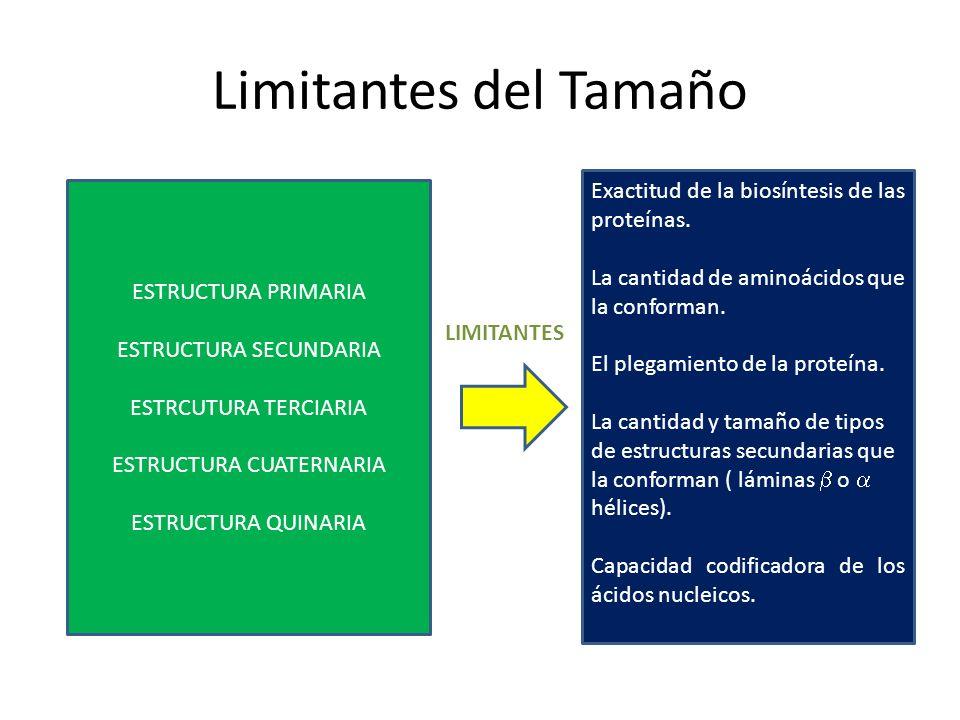 Limitantes del Tamaño ESTRUCTURA PRIMARIA ESTRUCTURA SECUNDARIA ESTRCUTURA TERCIARIA ESTRUCTURA CUATERNARIA ESTRUCTURA QUINARIA Exactitud de la biosín