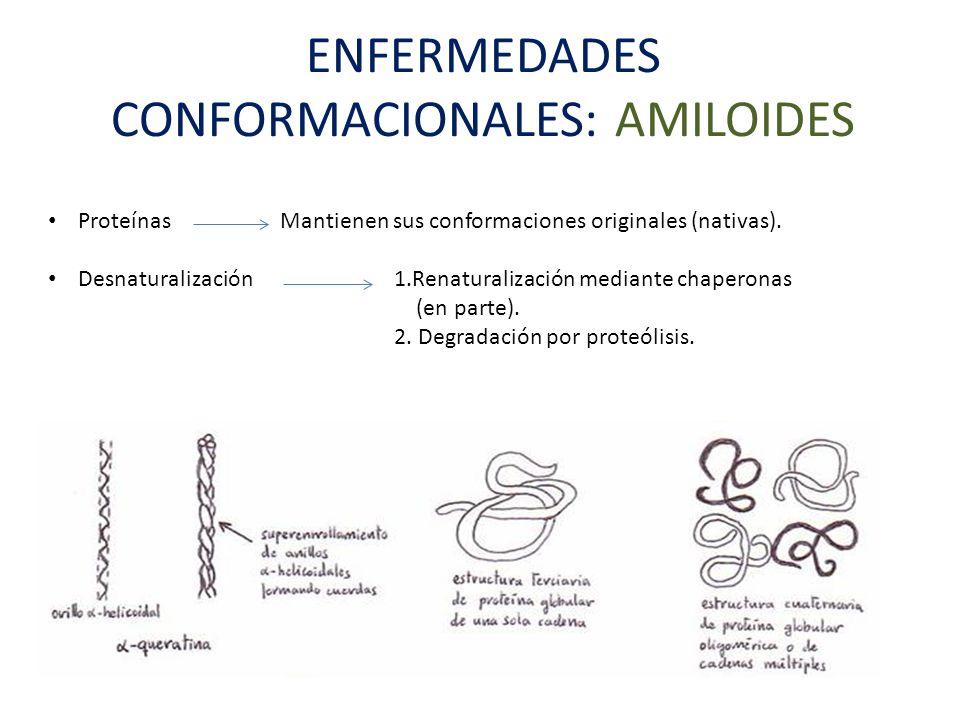 ENFERMEDADES CONFORMACIONALES: AMILOIDES Proteínas Mantienen sus conformaciones originales (nativas). Desnaturalización 1.Renaturalización mediante ch