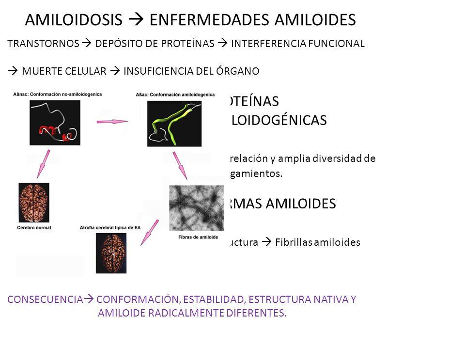 AMILOIDOSIS ENFERMEDADES AMILOIDES TRANSTORNOS DEPÓSITO DE PROTEÍNAS INTERFERENCIA FUNCIONAL MUERTE CELULAR INSUFICIENCIA DEL ÓRGANO PROTEÍNAS AMILOID