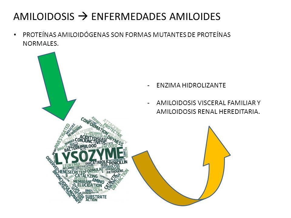 AMILOIDOSIS ENFERMEDADES AMILOIDES PROTEÍNAS AMILOIDÓGENAS SON FORMAS MUTANTES DE PROTEÍNAS NORMALES. -ENZIMA HIDROLIZANTE -AMILOIDOSIS VISCERAL FAMIL