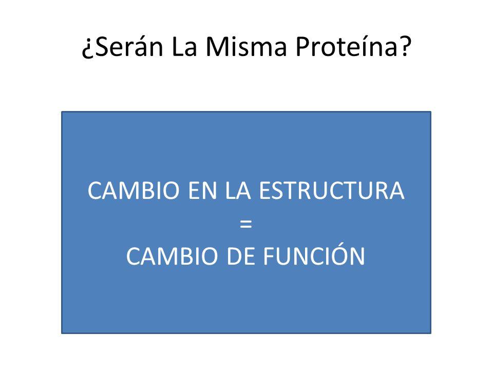 ¿Serán La Misma Proteína? CAMBIO EN LA ESTRUCTURA = CAMBIO DE FUNCIÓN