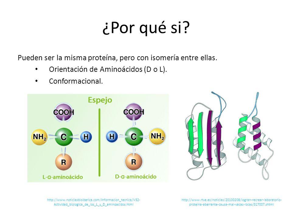 ¿Por qué si? Pueden ser la misma proteína, pero con isomería entre ellas. Orientación de Aminoácidos (D o L). Conformacional. http://www.rtve.es/notic