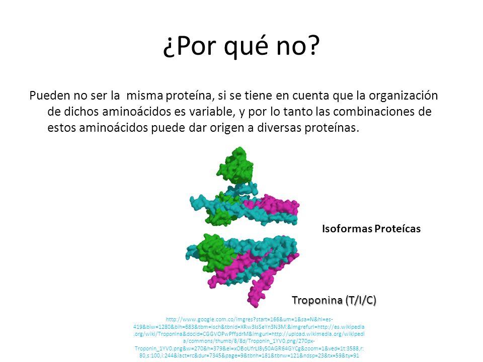 ¿Por qué no? Pueden no ser la misma proteína, si se tiene en cuenta que la organización de dichos aminoácidos es variable, y por lo tanto las combinac