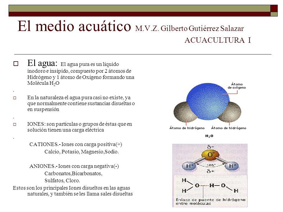 El medio acuático M.V.Z. Gilberto Gutiérrez Salazar ACUACULTURA I El agua: El agua pura es un líquido inodoro e insípido, compuesto por 2 átomos de Hi