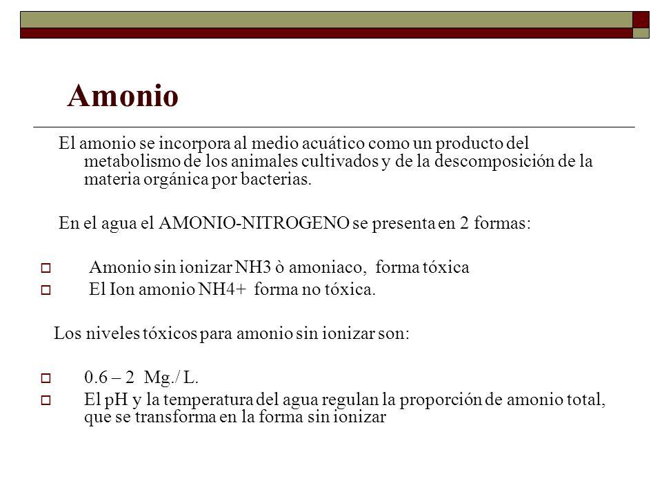 El amonio se incorpora al medio acuático como un producto del metabolismo de los animales cultivados y de la descomposición de la materia orgánica por
