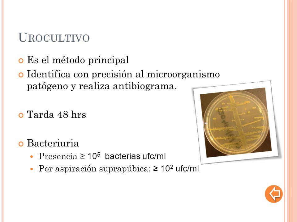 U ROCULTIVO Es el método principal Identifica con precisión al microorganismo patógeno y realiza antibiograma. Tarda 48 hrs Bacteriuria Presencia 10 5