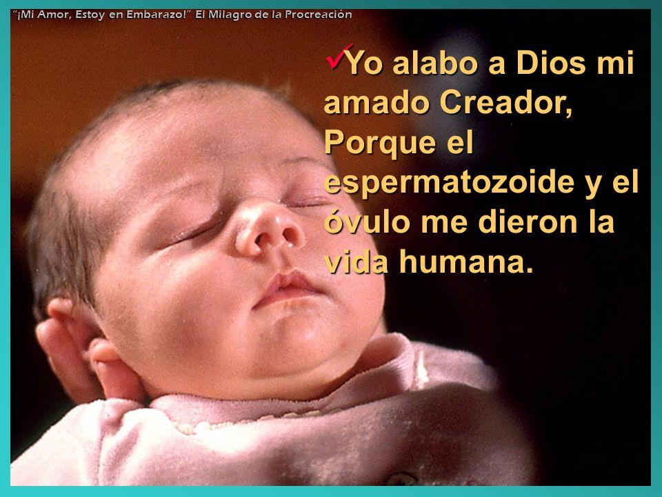 Yo alabo a Dios mi amado Creador, Porque el espermatozoide y el óvulo me dieron la vida humana. Yo alabo a Dios mi amado Creador, Porque el espermatoz