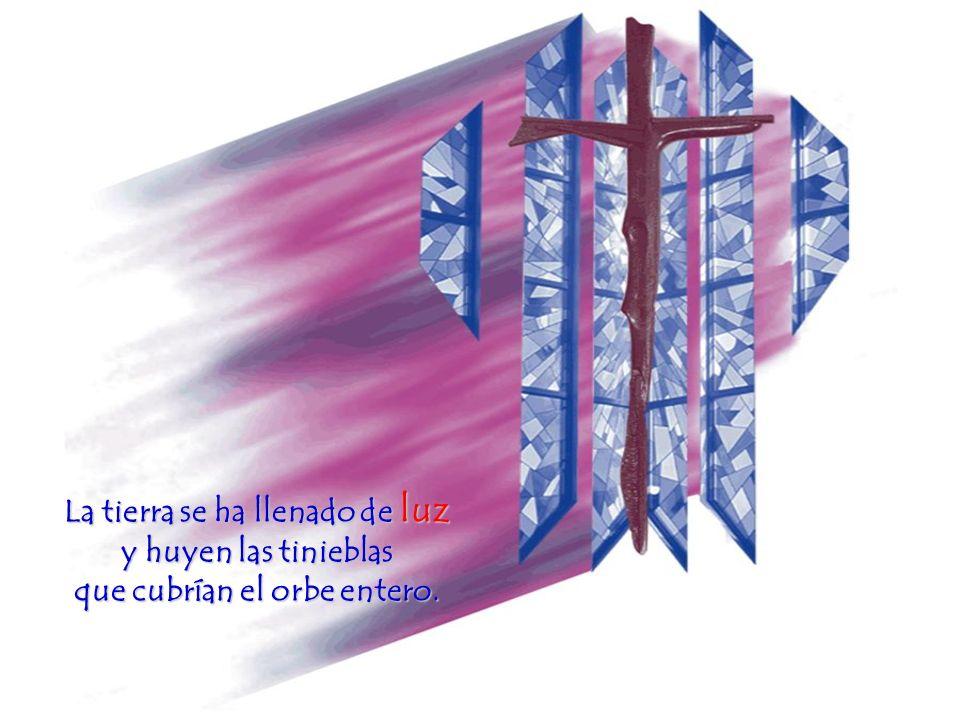 Pero, en fin, ya sé lo que muchos estáis pensando: Ninguno de nosotros hemos visto a Jesús, el Señor resucitado.