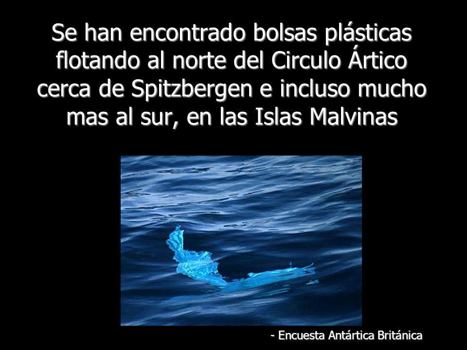 Se han encontrado bolsas plásticas flotando al norte del Circulo Ártico cerca de Spitzbergen e incluso mucho mas al sur, en las Islas Malvinas - Encue