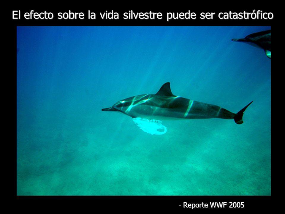 El efecto sobre la vida silvestre puede ser catastrófico - Reporte WWF 2005