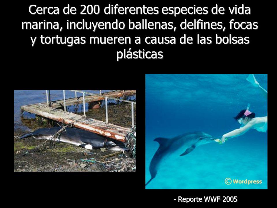 Cerca de 200 diferentes especies de vida marina, incluyendo ballenas, delfines, focas y tortugas mueren a causa de las bolsas plásticas - Reporte WWF
