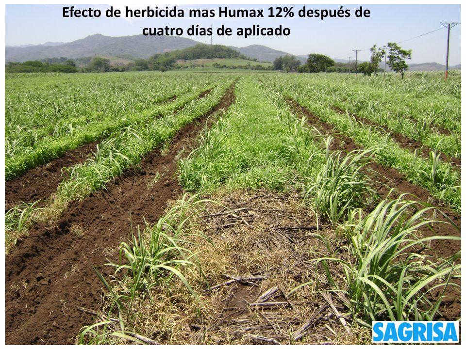 SAGRISA Efecto de herbicida mas Humax 12% después de cuatro días de aplicado