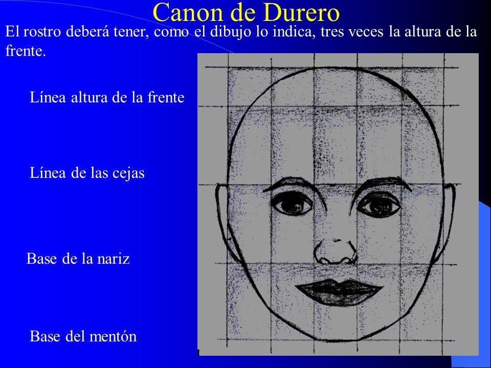 Canon de Durero El rostro deberá tener, como el dibujo lo indica, tres veces la altura de la frente. Base del mentón Base de la nariz Línea de las cej