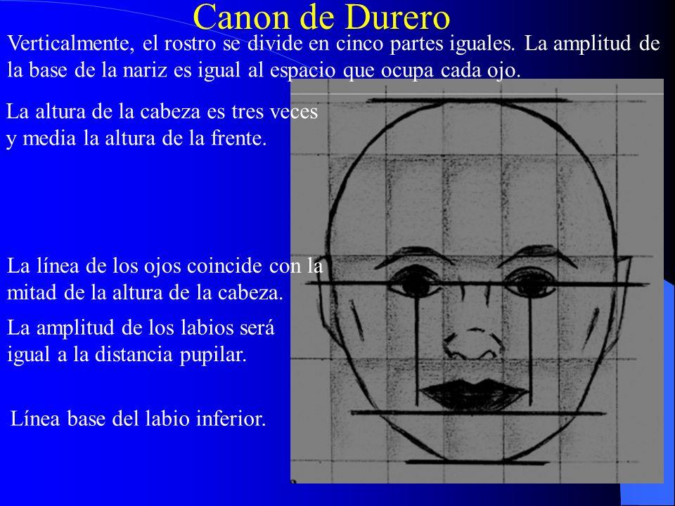 Canon de Durero Verticalmente, el rostro se divide en cinco partes iguales. La amplitud de la base de la nariz es igual al espacio que ocupa cada ojo.