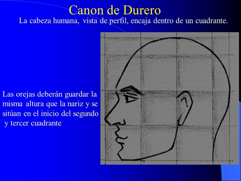 Canon de Durero La cabeza humana, vista de perfil, encaja dentro de un cuadrante. Las orejas deberán guardar la misma altura que la nariz y se sitúan