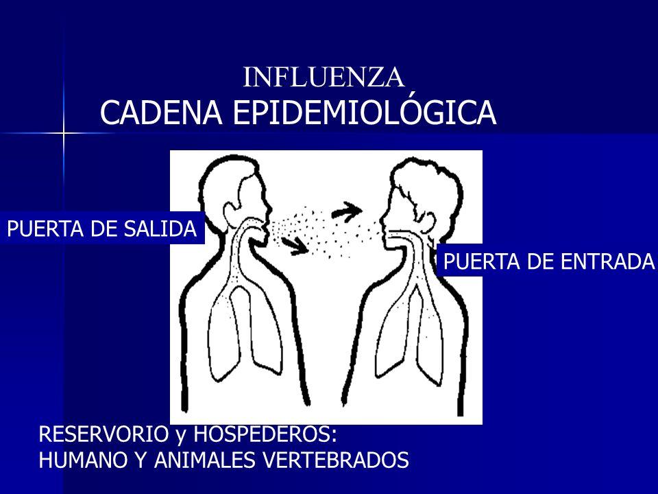 CADENA EPIDEMIOLÓGICA RESERVORIO y HOSPEDEROS: HUMANO Y ANIMALES VERTEBRADOS PUERTA DE SALIDA PUERTA DE ENTRADA