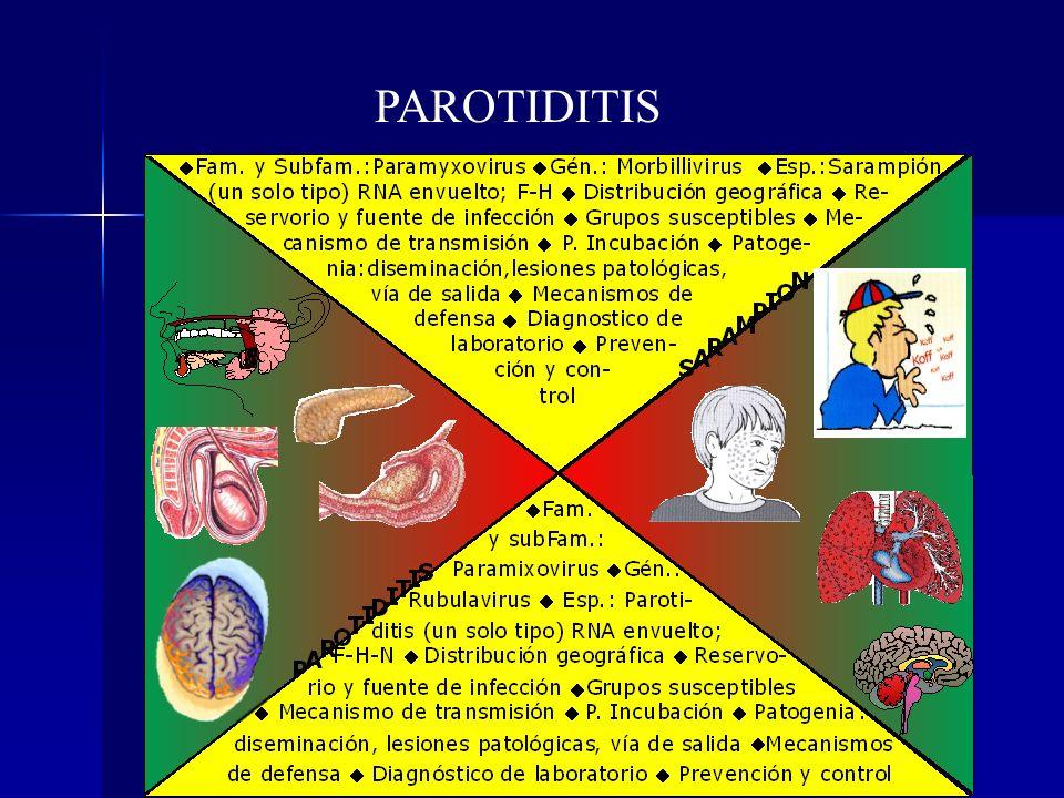 PAROTIDITIS VIRUS