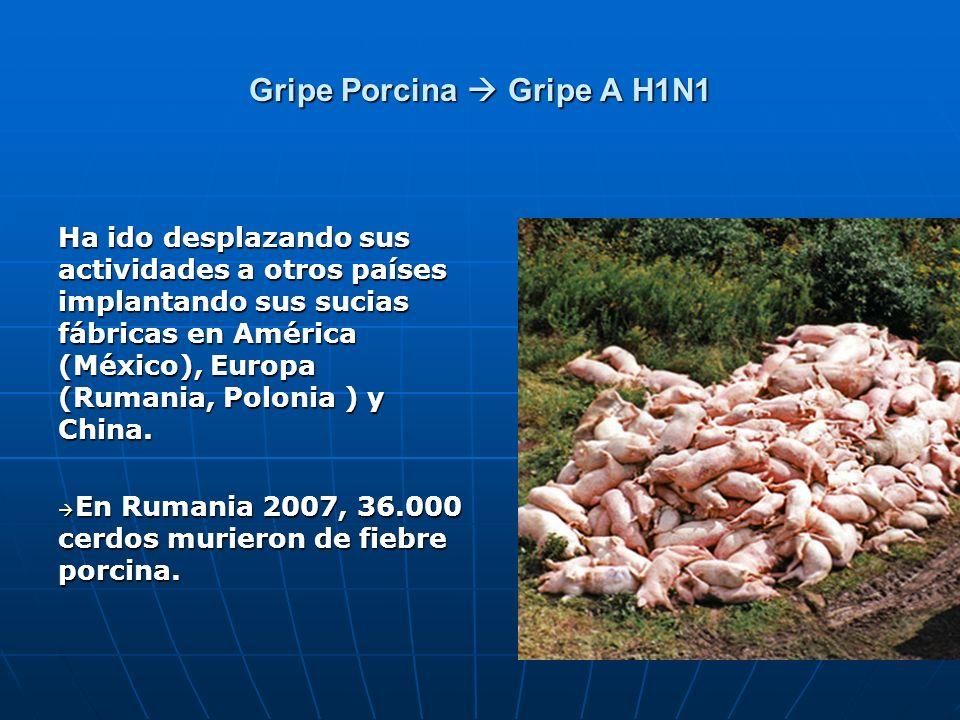Gripe Porcina Gripe A H1N1 Ha ido desplazando sus actividades a otros países implantando sus sucias fábricas en América (México), Europa (Rumania, Pol